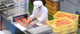 工場見学 工場作業光景の写真